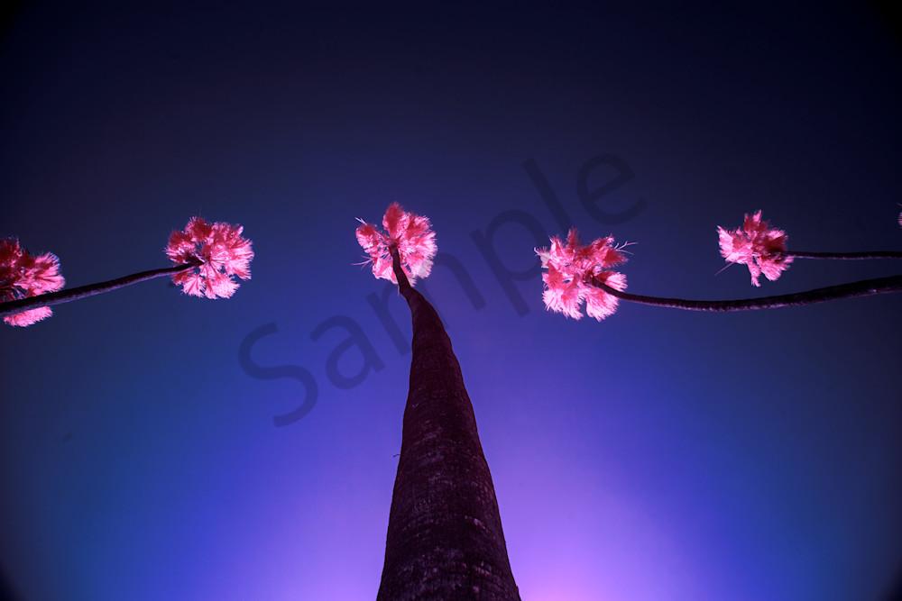 Palm Fireworks Photography Art | shawnangelski