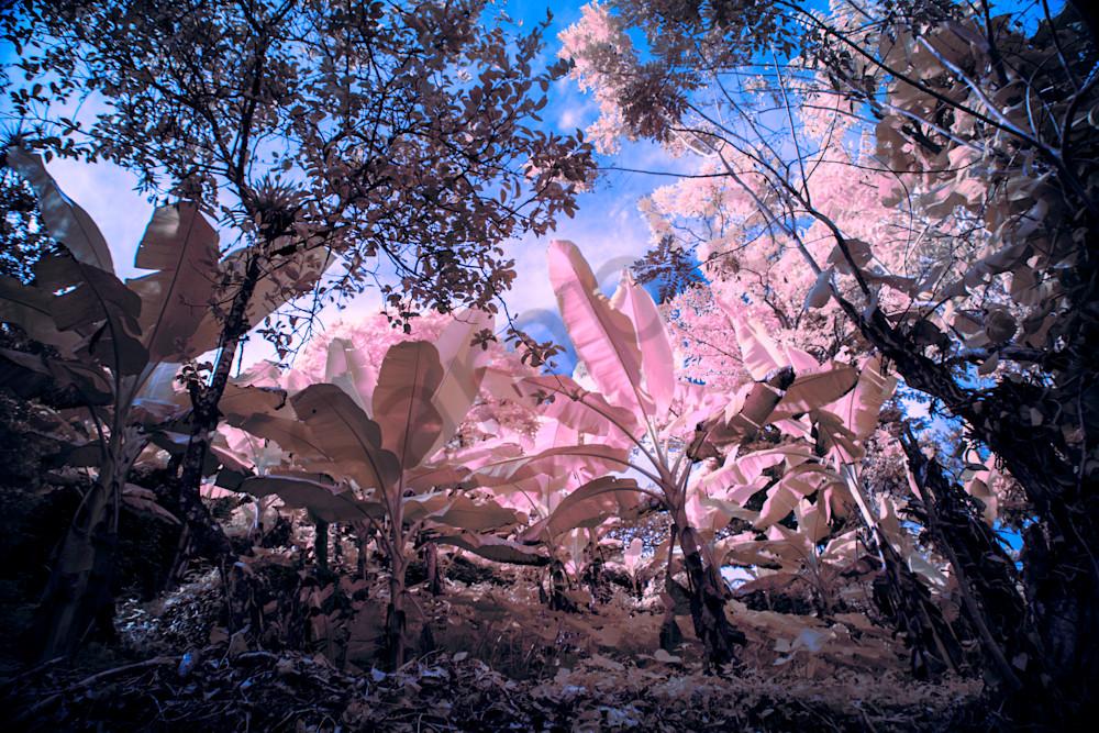 Blue Mountain Palms Photography Art | shawnangelski