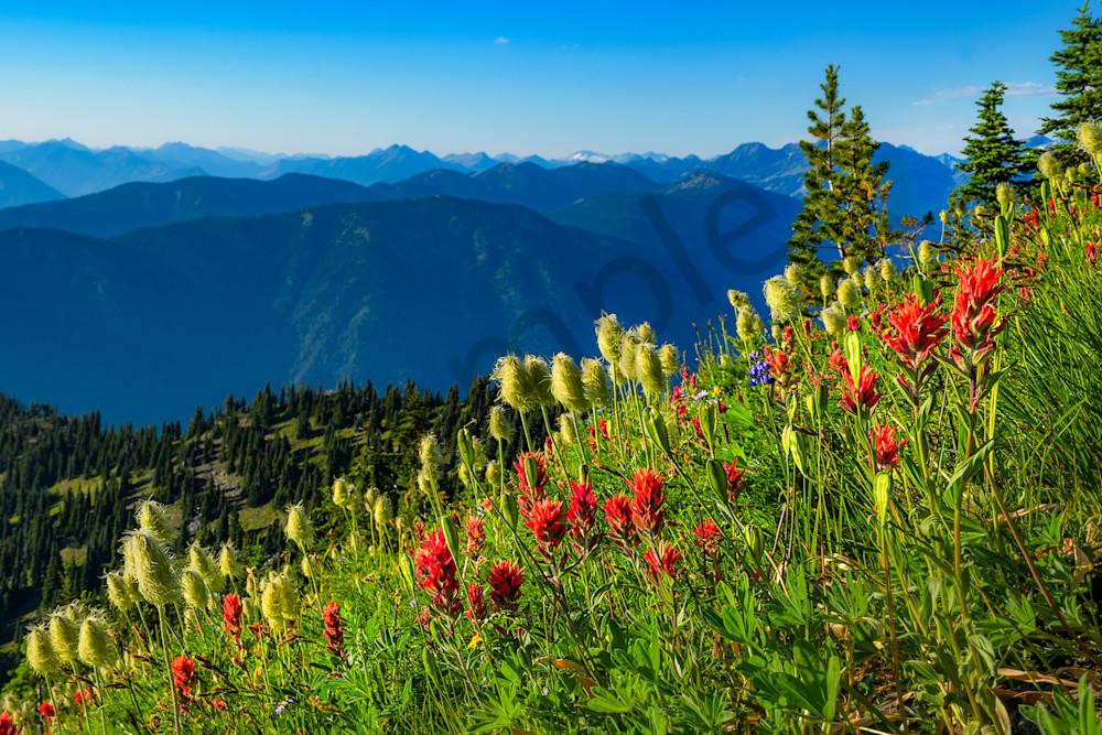 Idaho Peak Wild Flowers Photography Art | Kokanee Camera and Nelson Fine Art Printing