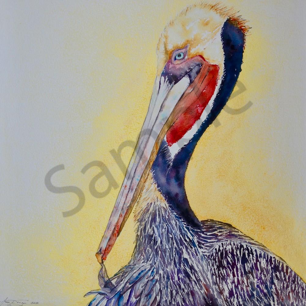 Harold the Pelican