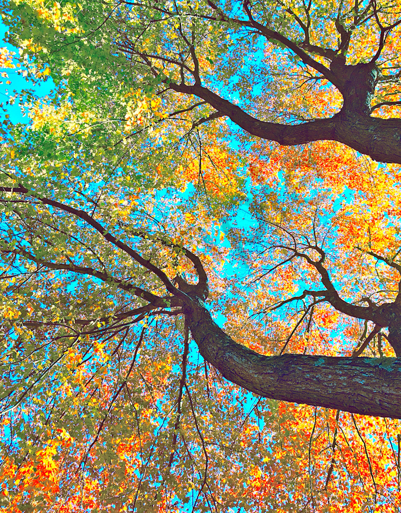 Thousands Of Voices|Fine Art Photography by Todd Breitling|Trees and Leaves|Todd Breitling Art