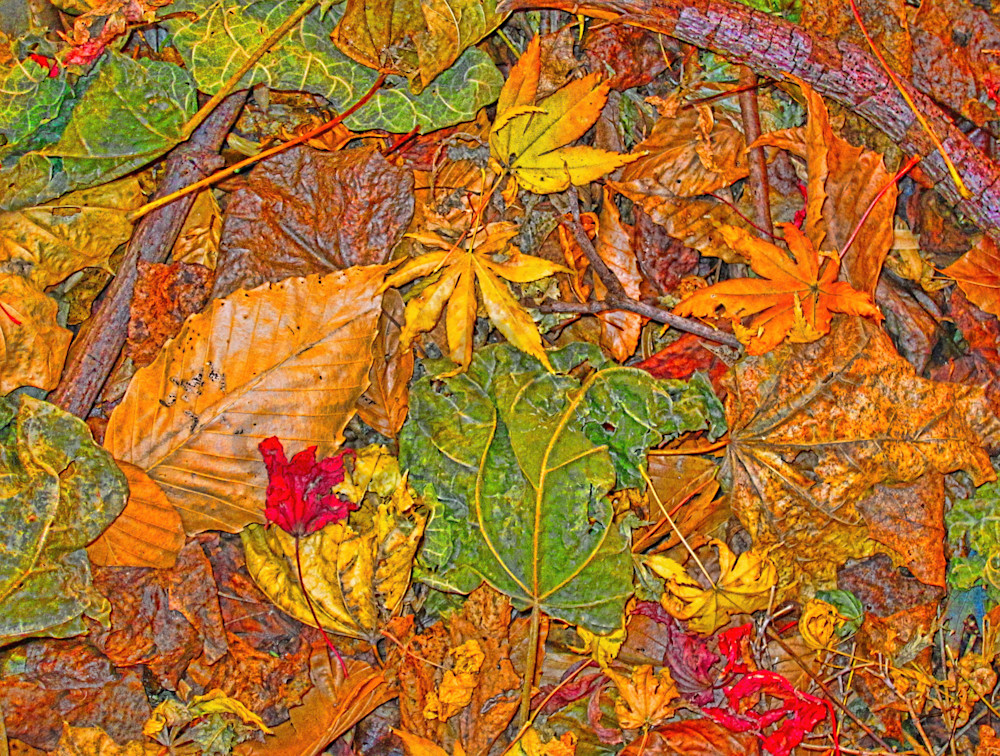 Leafscape Pile|Fine Art Photography by Todd Breitling|Trees and Leaves|Todd Breitling Art|