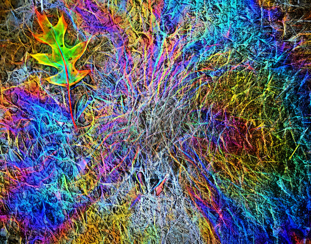 Leaf and Oil On Pavement|Fine Art Photography by Todd Breitling|Oil On Pavement|Todd Breitling Art|