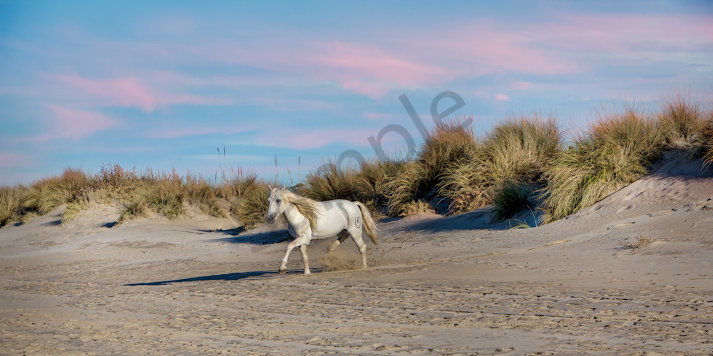 Beach Stallion 0654 Photography Art | Bridget Karam Photography