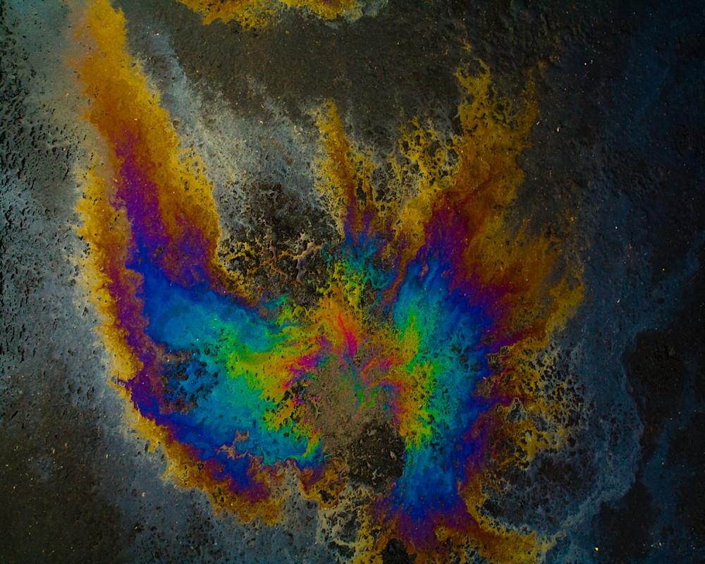 Oil On Pavement:Find Your Wings Fine Art Photography Oil On Pavement Todd Breitling Art 