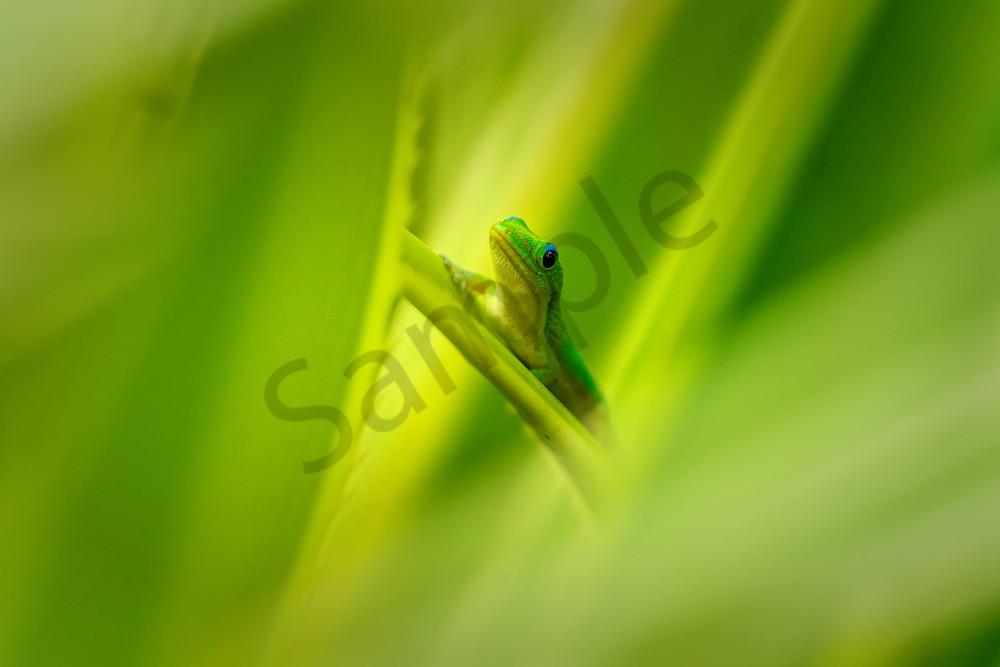 Hawaii Nature Photography | Mo'o Oasis by Peter Tang