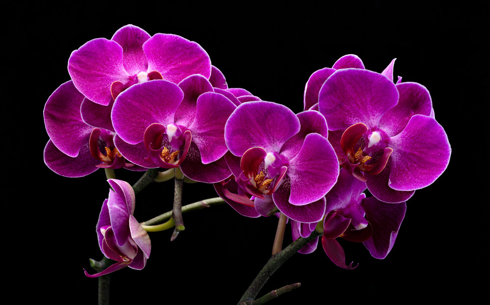 Orchids 1 Photography Art | frednewmanphotography