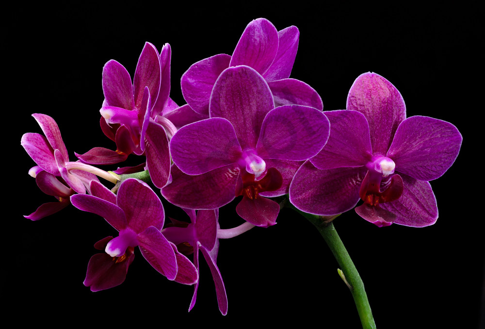 Orchids 2 Photography Art | frednewmanphotography