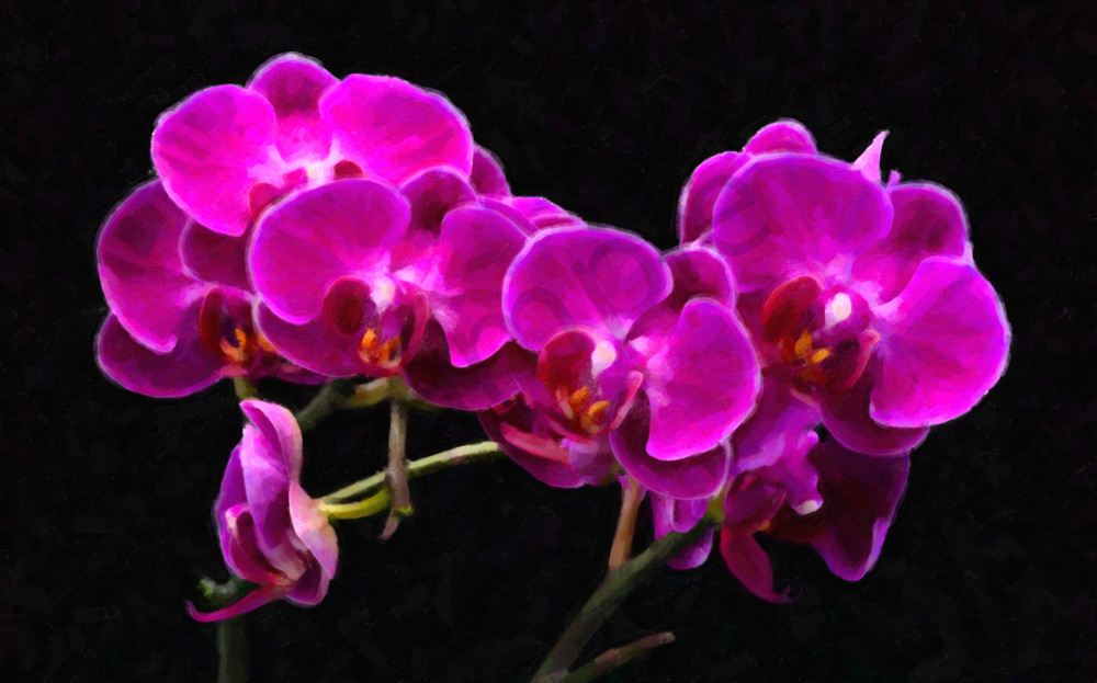 Orchids 3 Photography Art | frednewmanphotography