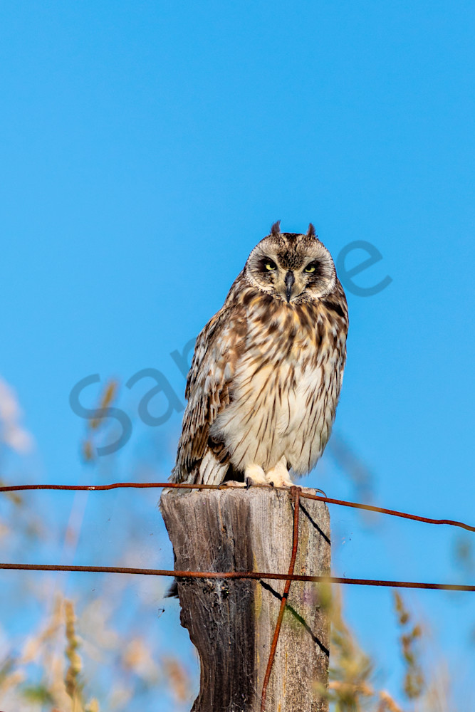 Hawaii Nature Photography | Hawaiian Owl by Leighton Lum