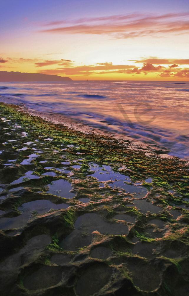 Hawaii Beachscapes   Laniakea by William Weaver