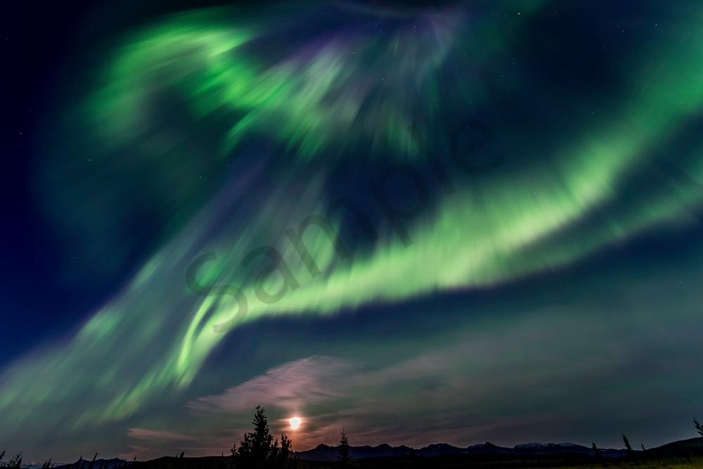 Northern lights with full moon Denali Alaska #1