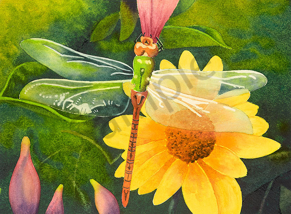 Dragonfly fine art print by Jim Dolan.