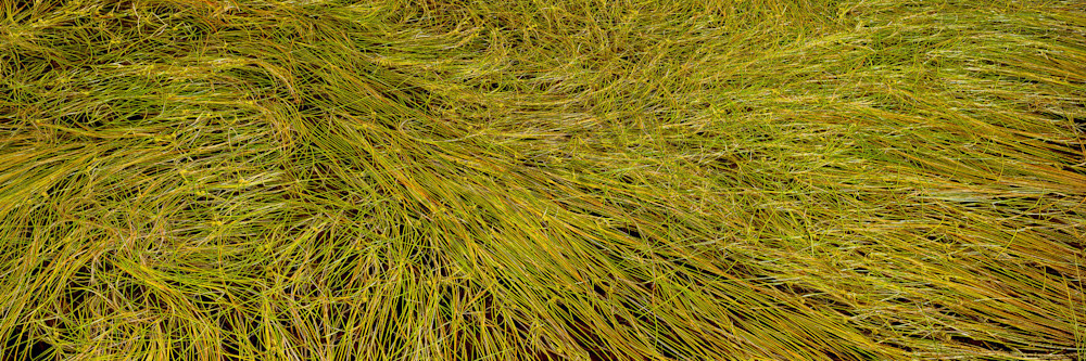 Grass Study Photography Art | Scott Cordner Photography