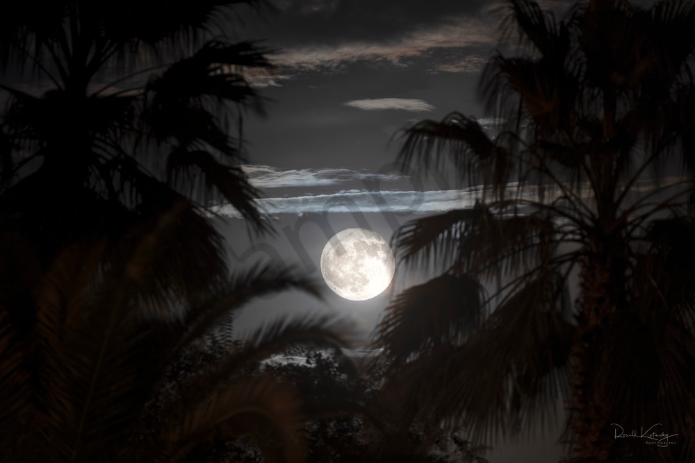 Palms of the Harvest Moon Photographic Fine Art