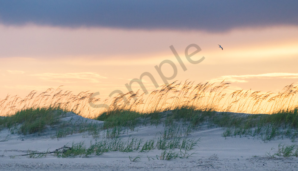 Folly Beach Sand Dunes at Sunset