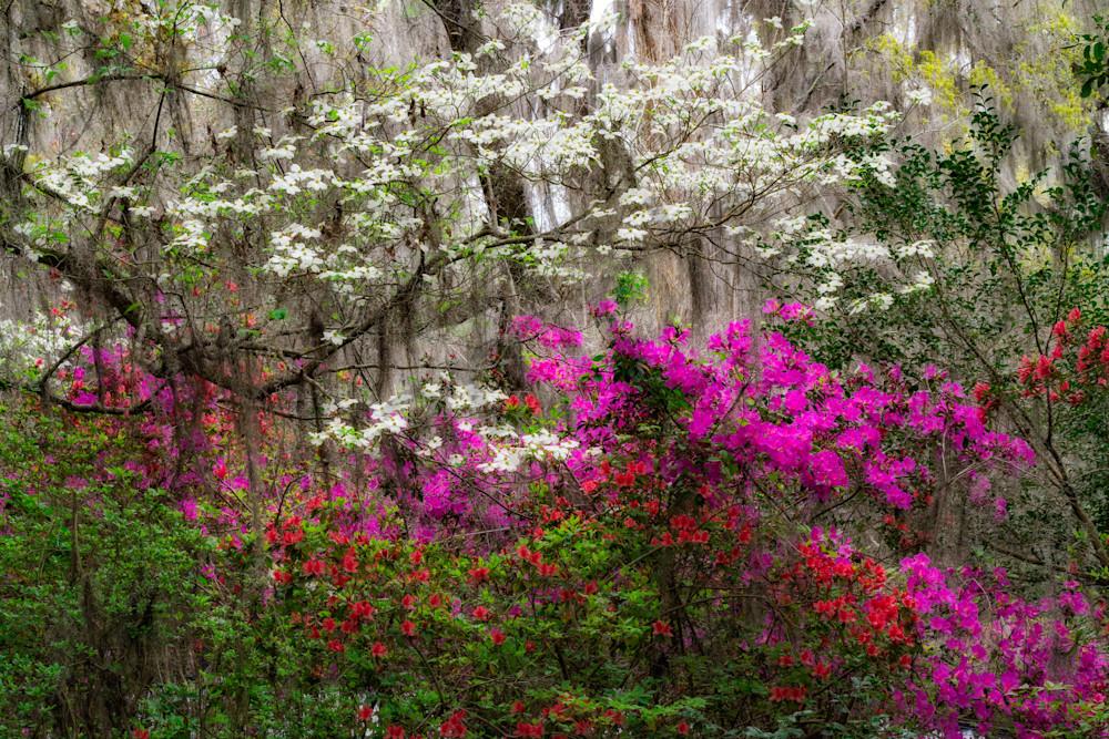 Magnolia Plantation Eden