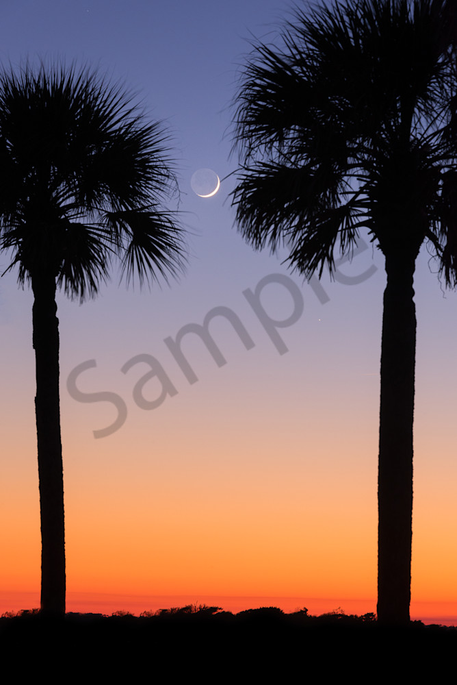 Folly Crescent Moon between the Palmettos
