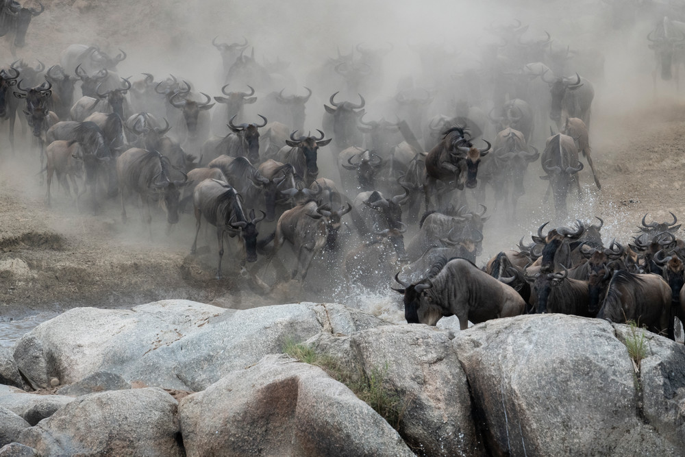 The great migration - Africa Wildebeest Migration - fine art photography wildlife - JP Sullivan Photography, Inc.