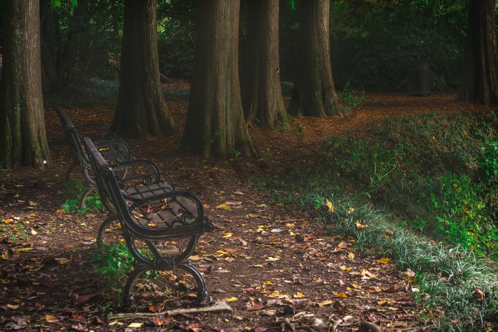 Fall Serenity | Susan J Photography [Atlanta]