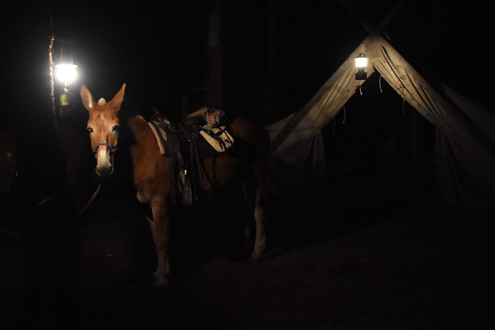Photograph of a mule, lanterns and a wall tent for sale as Fine Art