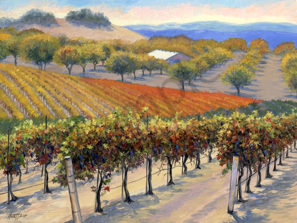 Autumn Vines at Opolo