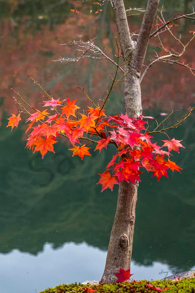 Autumn wonders
