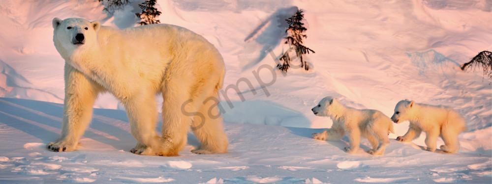 Wait Up Mama Photography Art | Tecshots