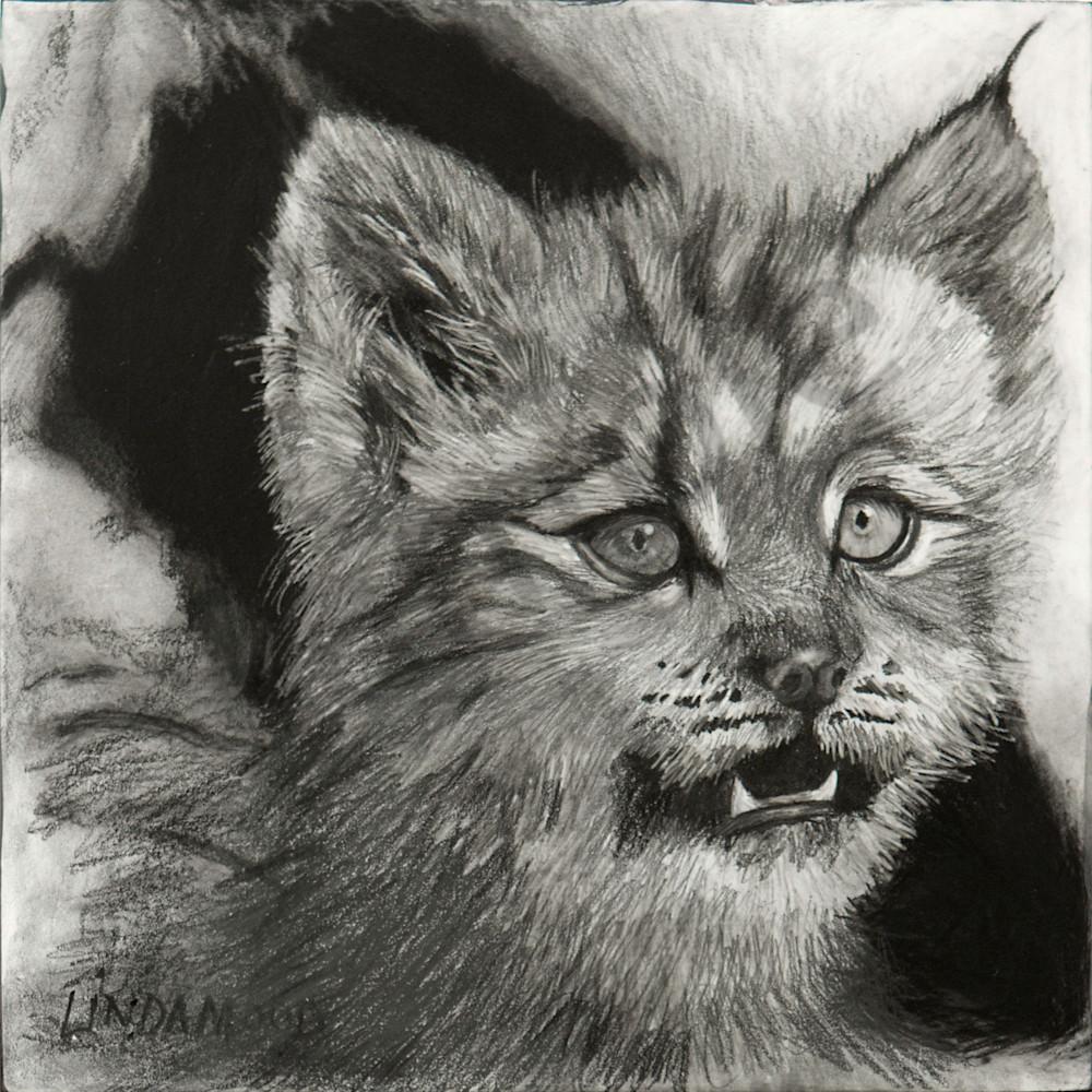 Bobcat s Defense