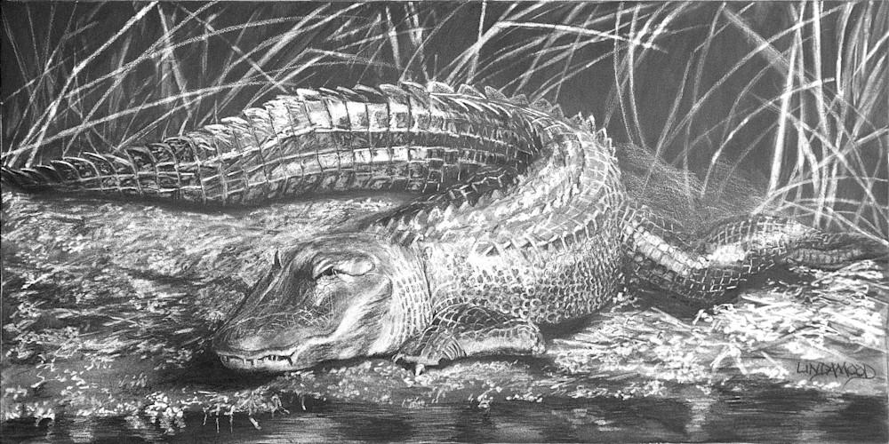 Brazos Gator