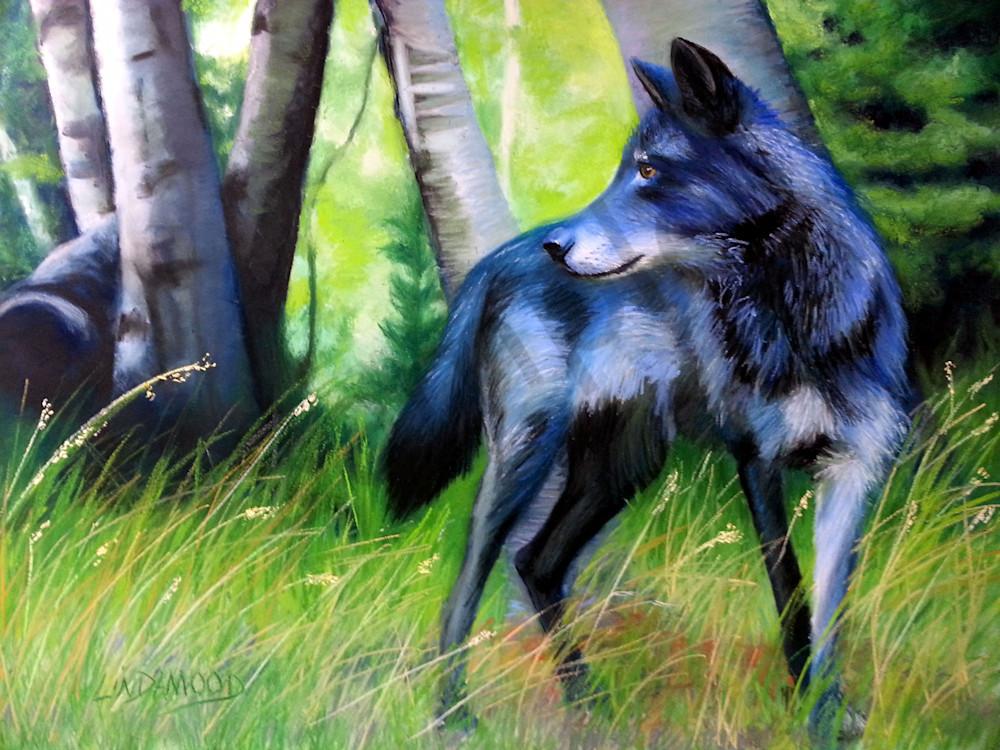 Black Wolf Wariness