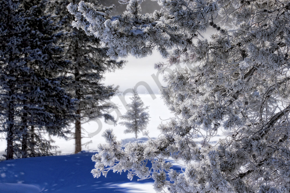 Snow Scene Wall Art   Robbie George Photography