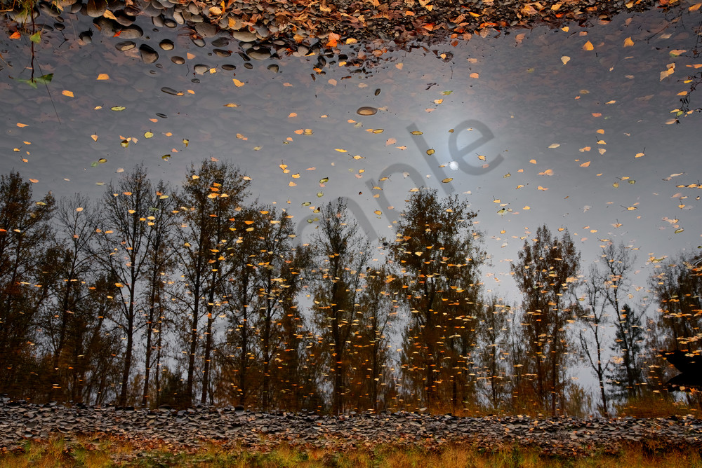 reflected trees, Springfield, Oregon, fall leaves, upside down, turned over