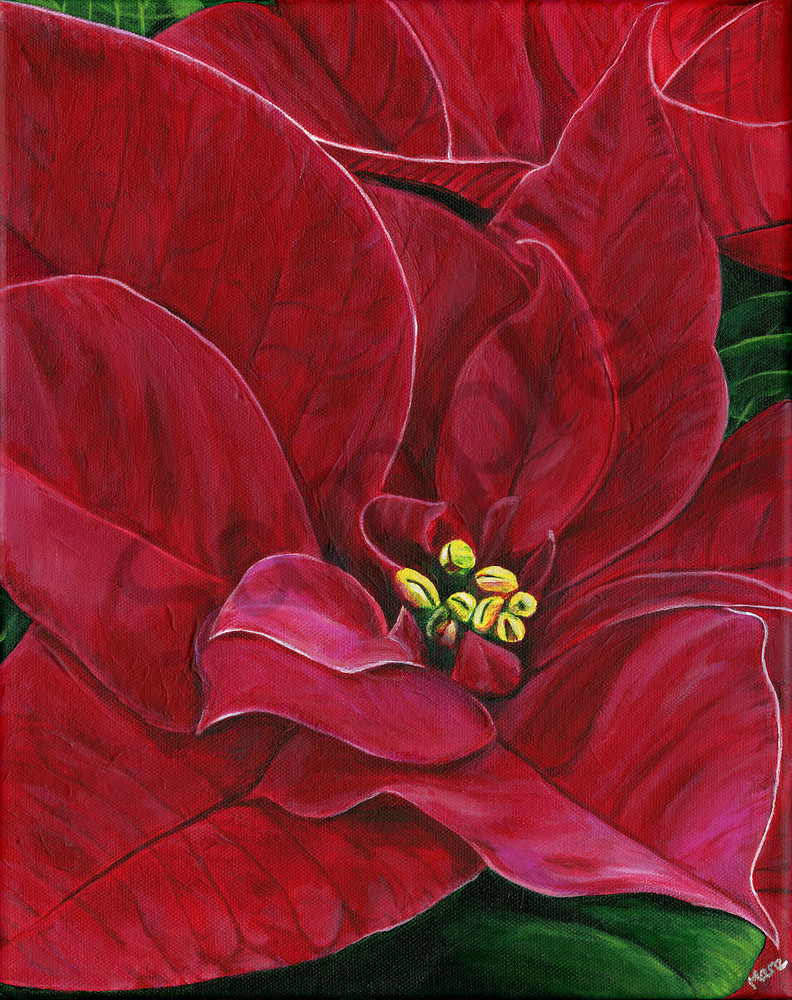 Acrylic painting of Poinsettia Passion by artist Mary Anne Hjelmfelt