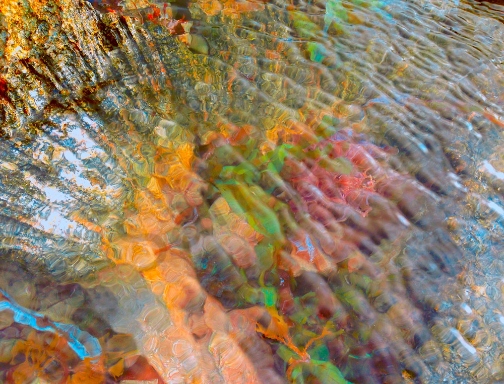 Tidal Pool and CoralFine Art Photography by Todd Breitling