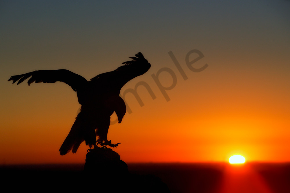 Bald Eagle At Sunrise | Robbie George Photography
