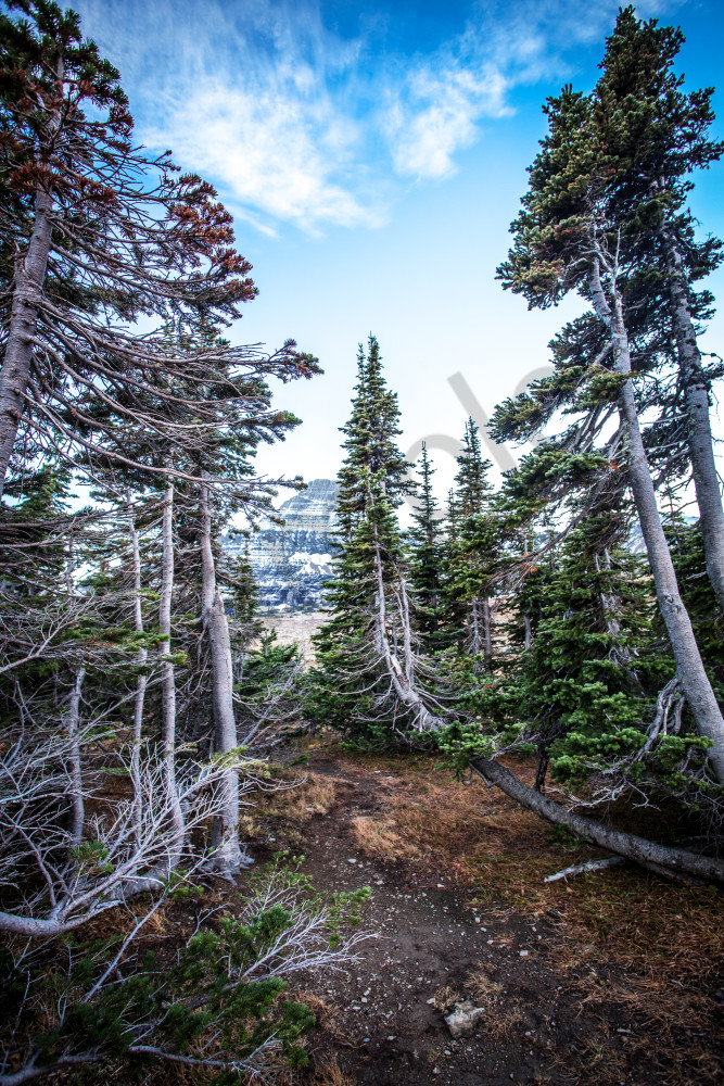 Montana Forest