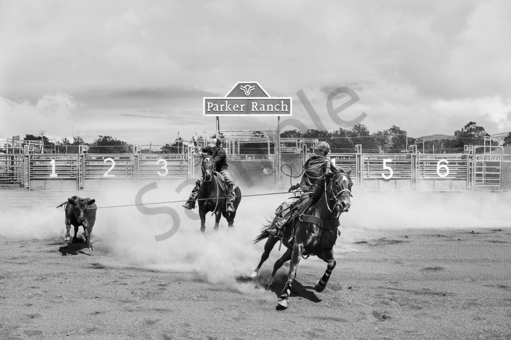 Rodeo Photography Art | seelikeshane