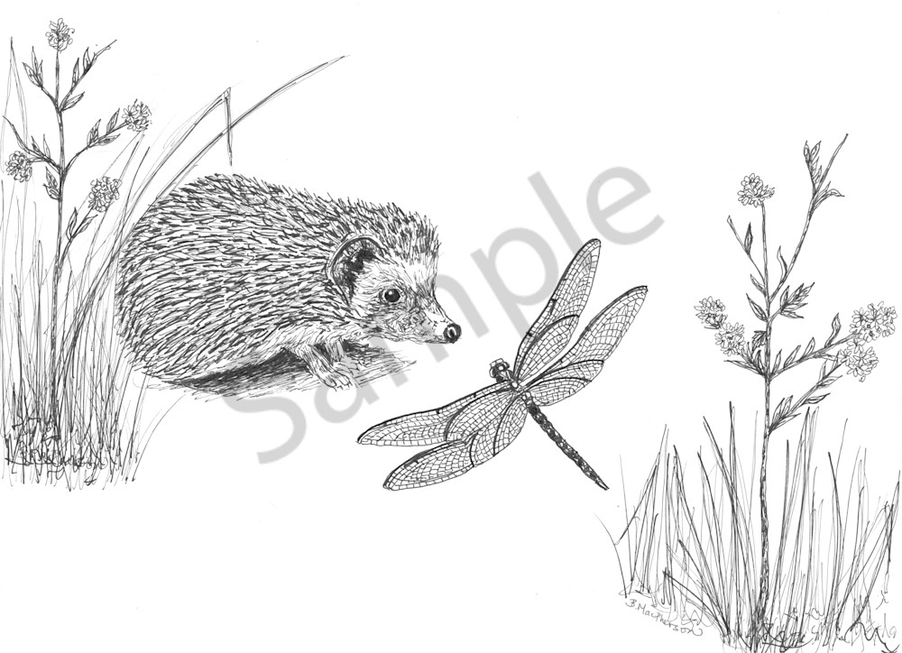 Fine Art Print of Original Illustration of a Magical Hedgehog and Dragonfly by Becky MacPherson