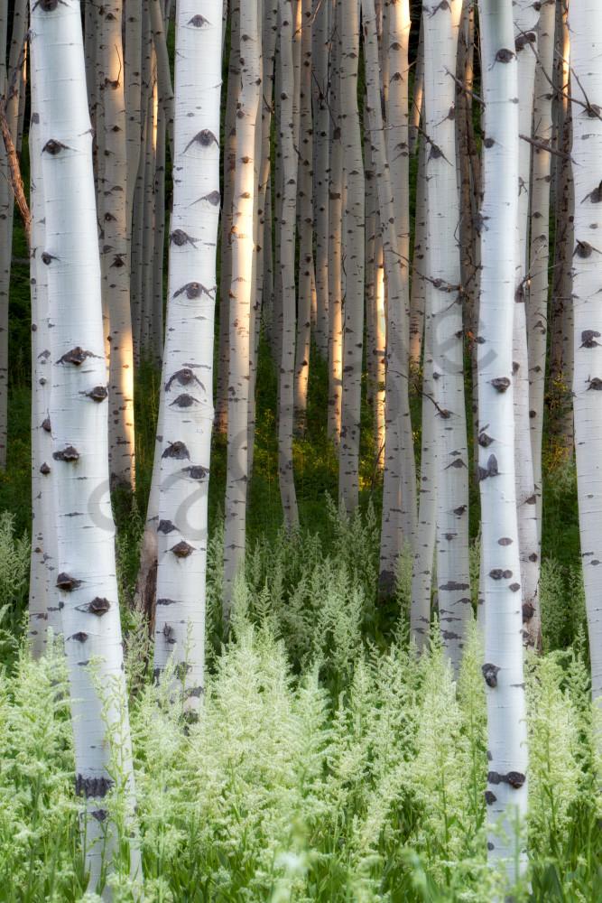 Forest Fine Art Prints | Robbie George