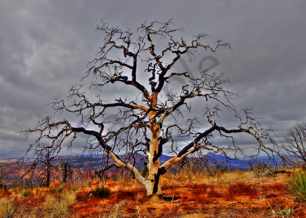 Stunning Tree Photograph-shop art/Masonandmasonimages.com