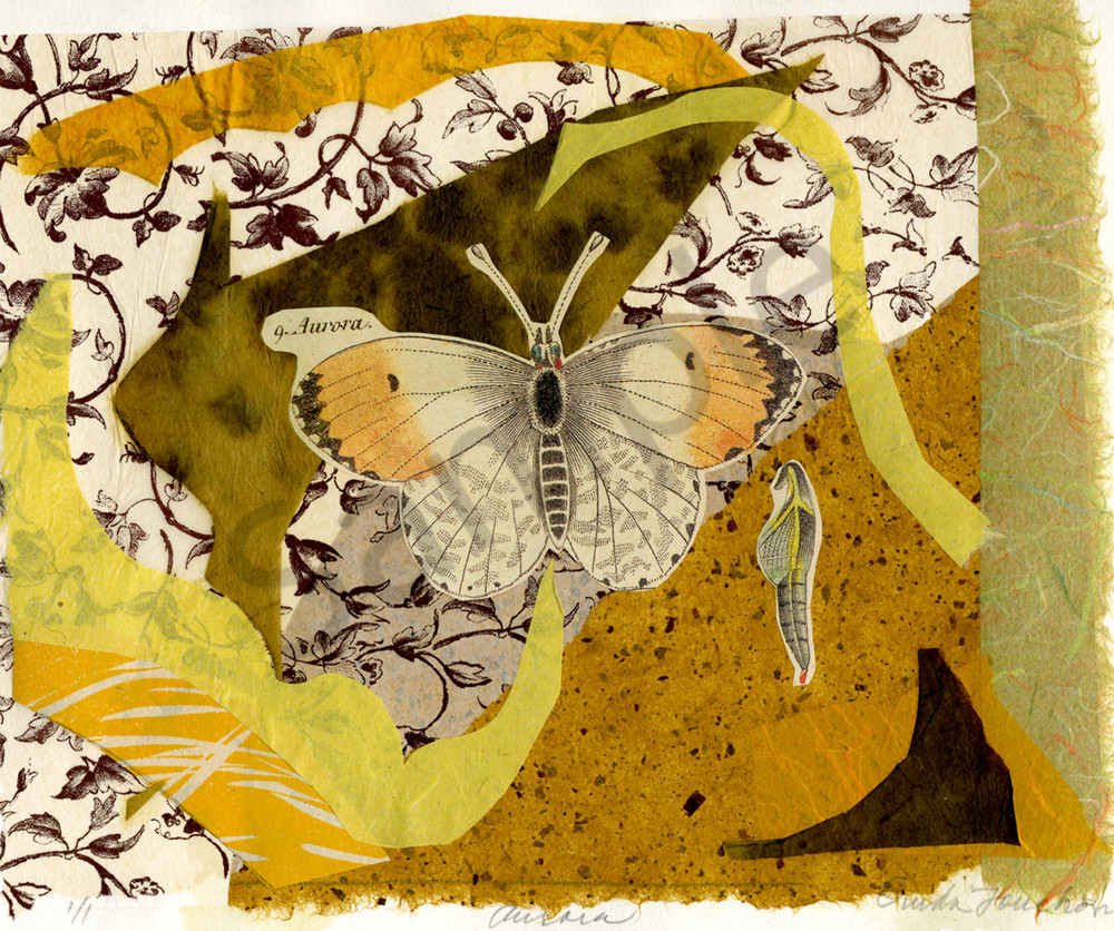Aurora butterfly, vintage lithograph with chine colle, fine art collage for sale by the artist Ouida Touchon