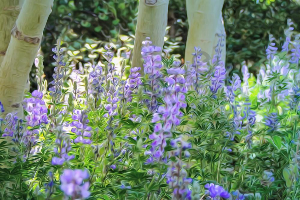 Aspen blooms - shop art at MasonandMasonimages.com