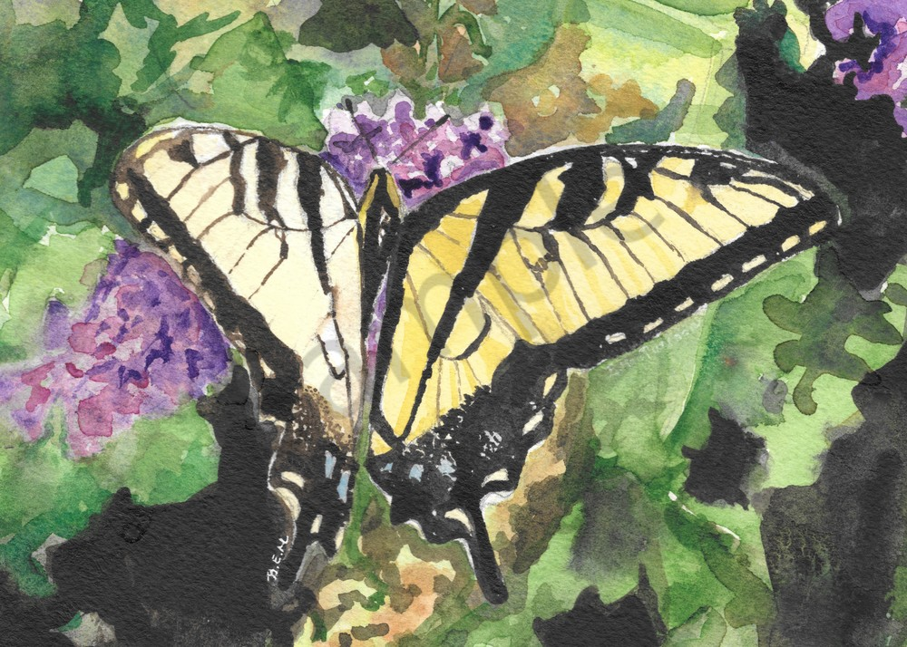 Monarch Butterfly Original Watercolor Print by Becky MacPherson