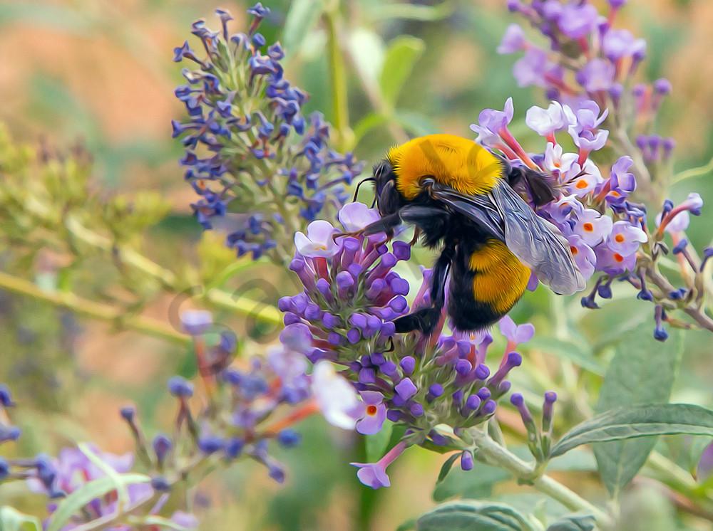Life's Nectar - Bees are Life, shop art MasonandMasonImages.com
