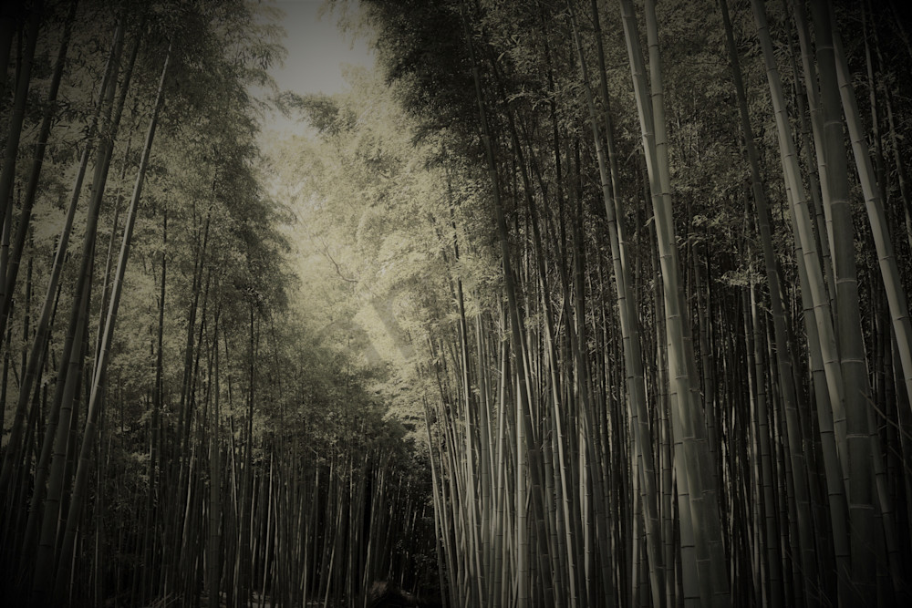 Japan Bamboo Depth