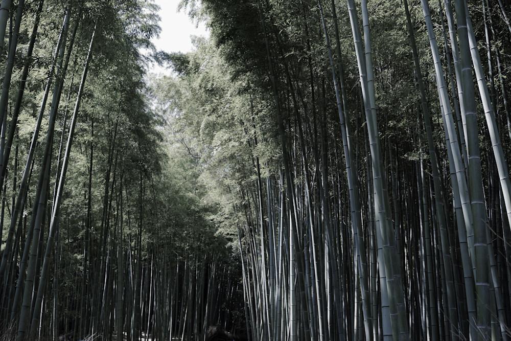 Japan Bamboo Mystery