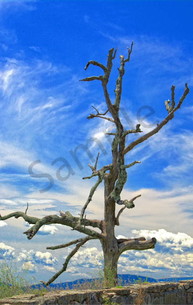 Lonely Tree Art   No Blink Pictures, LLC