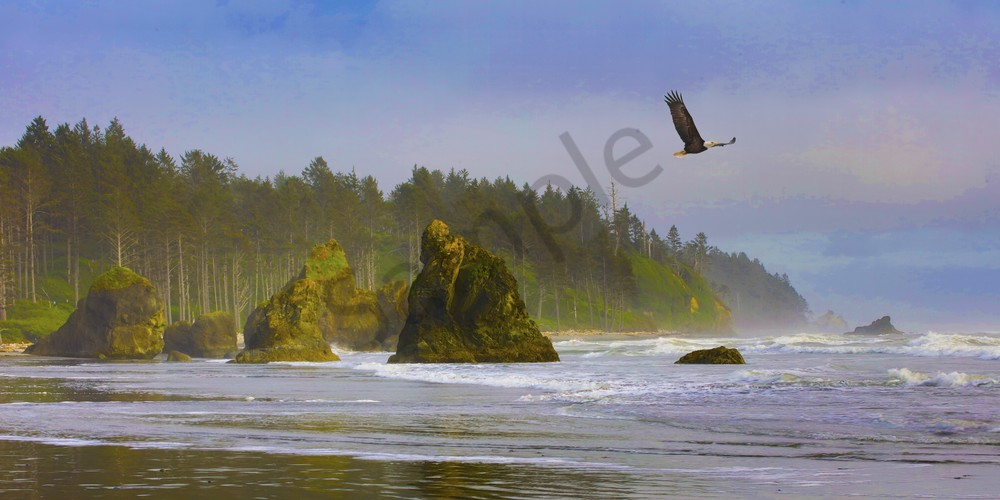 Pnw Ruby Beach Eagle 1 Photography Art | John Martell Photography