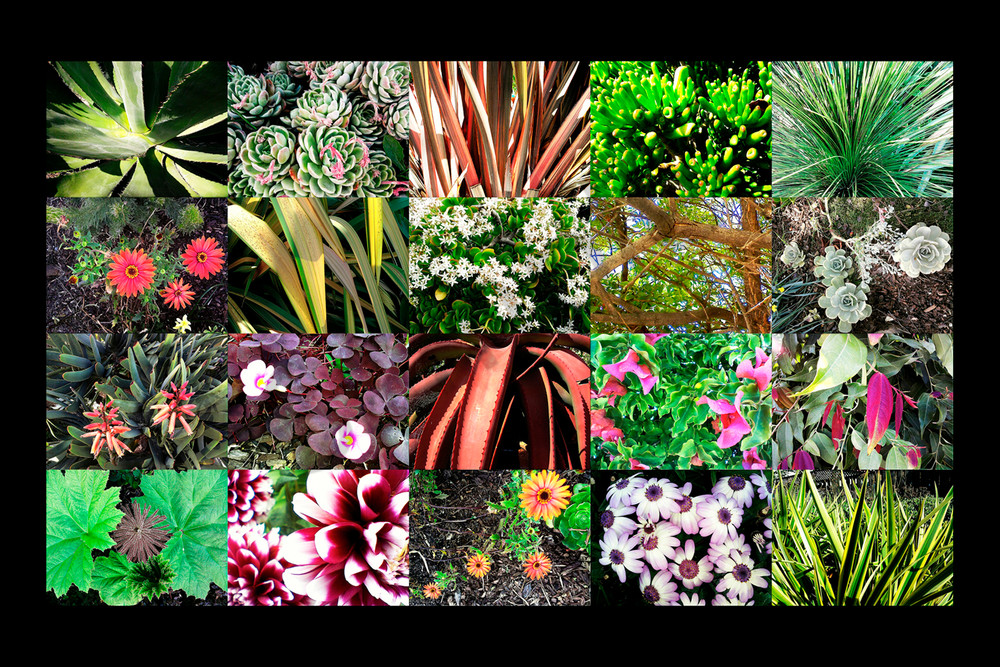 Flower Collage for sale as Fine Art